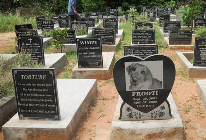 Dog Burial in Delhi
